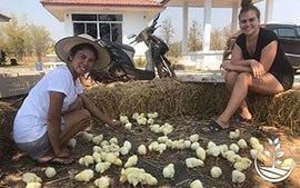 Thaïlande : la ferme-auberge écologique qui réinvente le tourisme