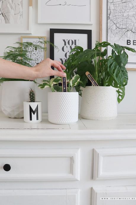 DIY – Marques plantes
