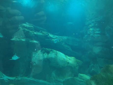 Une visite à l'aquarium et spectacle de sirène