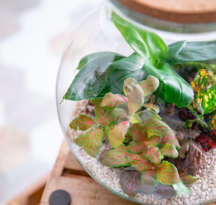 Les bienfaits d'un terrarium, le mini jardin intemporel !