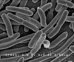 #thelancetinfectiousdiseases #escherichiacoli #pathogénécité #vaccin Innocuité et immunogénécité d'un vaccin contre le pathogène extra-intestinal Escherichia coli (ESTELLA) : un essai de phase 2 randomisé contrôlé