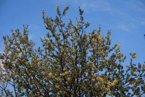 Jardins clos et charognes fleurs