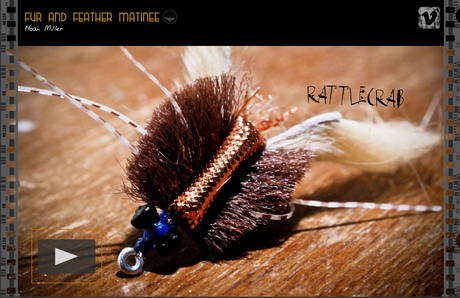 Southern Culture On the Fly N° 31