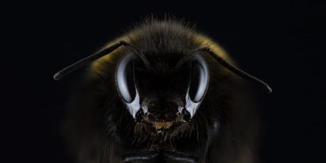 Après l'affaire du siècle, signez la pétition pour la protection des abeilles