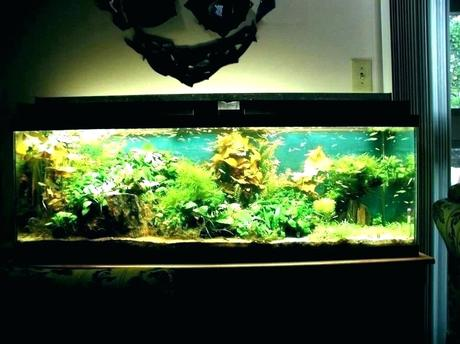 modern fish tank modern fish tank natural with contemporary tanks for sale t cool modern fish tanks diy modern fish tank stand