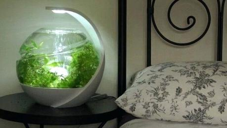 modern fish tank never clean your fish tank again smart aquarium turns slime and bacteria into food for crystal clear water daily mail online modern fish tank ideas