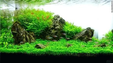 modern fish tank this three month old tank recreates greenery of the valley in addition to modern fish tank design
