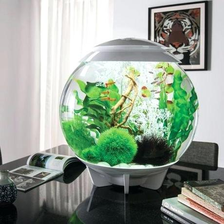 modern fish tank believe it or not this halo is a gallon modern round fish tank plenty big enough for quite a few fish back in the day we had a little modern fish tank design