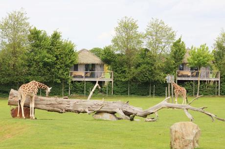 Nuit insolite : Dormir face aux girafes