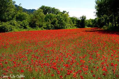La Provence des coquelicots