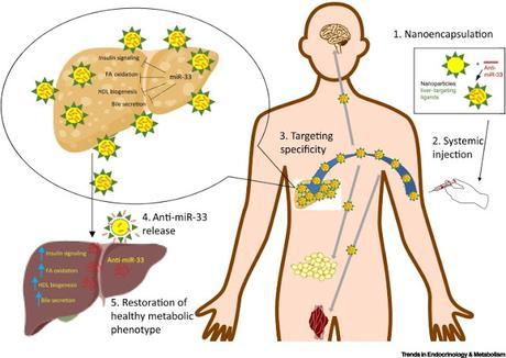 #trendsinendocrinologyandmetabolism #obésité #nanothérapies Promesses des Nanothérapies pour le traitement de l'Obésité