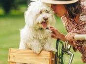 idées sortie avec chien