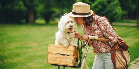 Des idées de sortie avec son chien