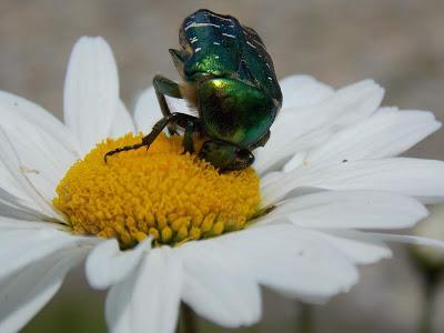 Vive la biodiversité au jardin !