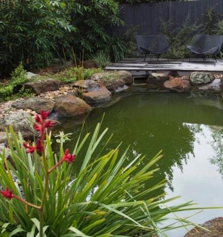 pisicine naturelle se nettoie avec des plantes respectueusesde l eau - blog déco - clematc