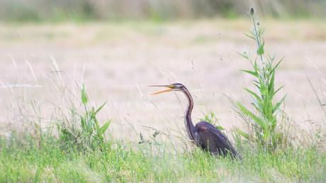 [Podcast #61] Filmer la nature et les animaux avec Léa Collober