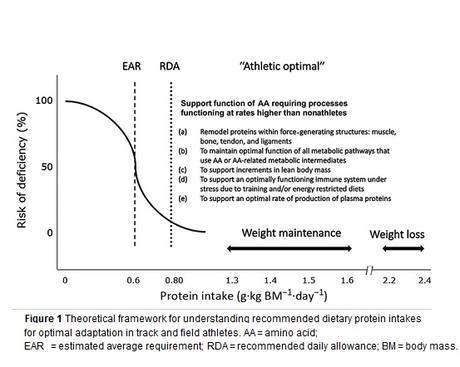 ATHLÉTISME : 1,6 g de protéines par kg de masse corporelle chaque jour
