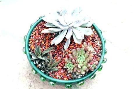 home depot cactus succulent soil home depot succulent soil mix new succulent soil mix home depot cactus and succulent home depot cactus soil canada