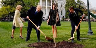 Donald Trump et nous : Les chênes qu'on abat
