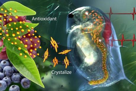 Ce nouveau système d'administration de médicaments qui détecte les niveaux élevés d'oxydants et réagit en administrant la quantité adéquate d'antioxydants nécessaire pour rétablir une homéostasie normale