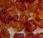 styrax Liquidambar orientalis Xiang)