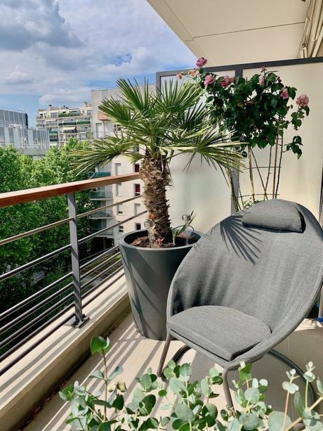 balcon terrasse plamier fauteuil rosier eucalyptus plante verte salon de jardin - blog déco - clemaroundthecorner