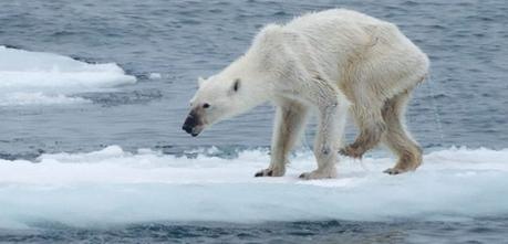 Le réchauffement climatique, une cause qui nous concerne tous