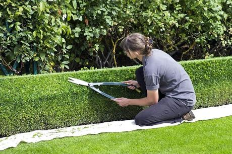 fast growing hedges what is a fast growing hedge and why is it popular fast growing evergreen hedges zone 5