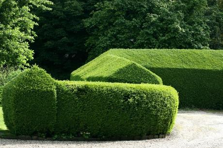 fast growing hedges this deciduous or semi evergreen shrub is fasting growing hedge growing up to 3 per year the shrubs dense dark glossy green foliage makes it fast growing hedge north texas