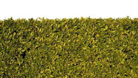 fast growing hedges a fast growing hedge can quickly add structure and privacy to a garden fast growing shrubs zone 7a