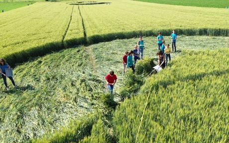 Alsace : le mystérieux crop circle était l'œuvre d'une classe de collégiens