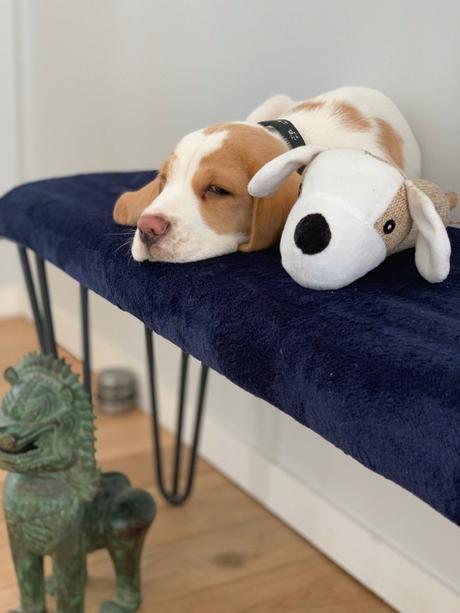 ripaton idée meuble diy bricolage facile chaise design