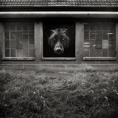 Les animaux de la street artist SONAC débarquent dans Mulhouse
