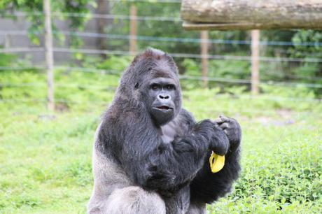 Balade au Zoo de la Boissière du Doré