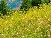 Merveilleuses fleurs montagnes
