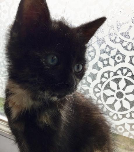 Marcel's catward