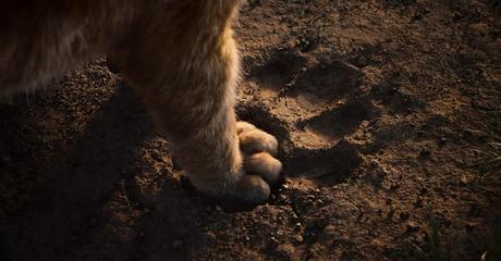 Le Roi Lion, le remake sublime et inutile