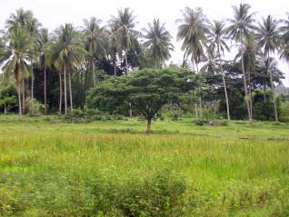 Agriculture en Thaïlande