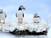 Farnes islands journee d'observation ornithologique