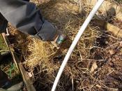Pourquoi couvrir d'un mulch végétal