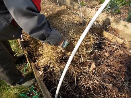 Pourquoi couvrir le sol d'un mulch végétal ?