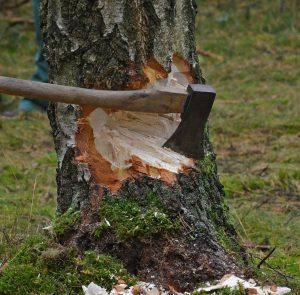 Comment abattre un arbre