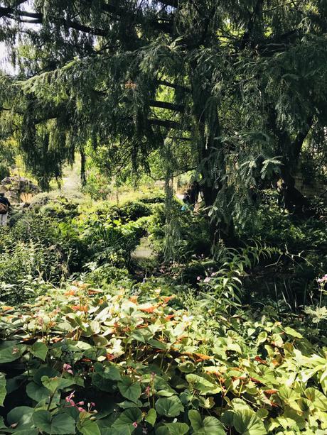 (Découvertes) A l'Arboretum de Chèvreloup, l'appel des arbres