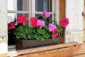 Disposer les fleurs dans une jardinière