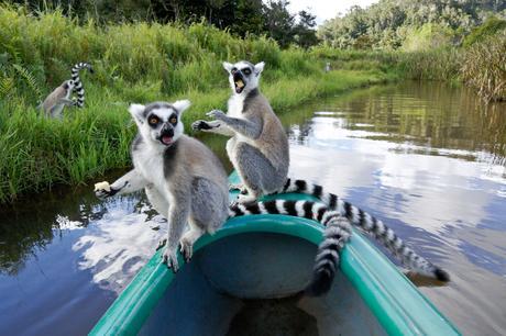 Découvrez les incontournables de l'Est malgache