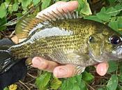 Rockfishing d'eau douce