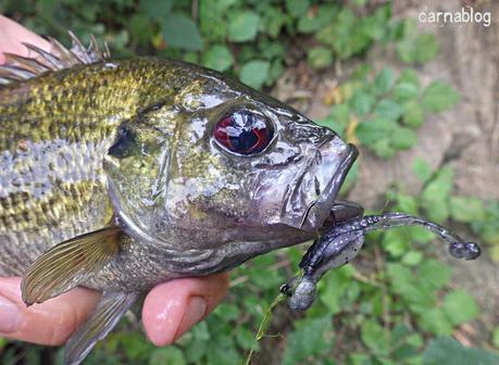 Rockfishing d'eau douce - II