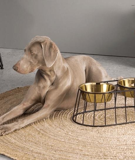 porte gamelle gold made design pour grand chien coin repas - blog déco - clemaroundthecorner