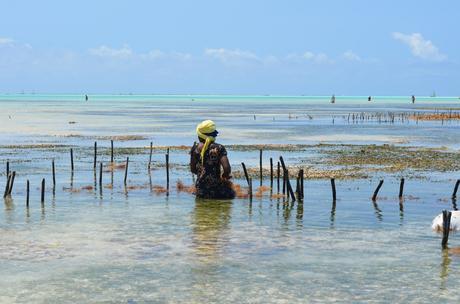 Partir en séjour balnéaire à Zanzibar, les incontournables