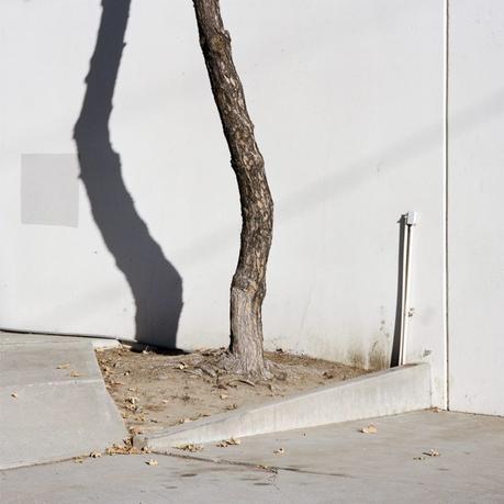 Sinziana Velicescu : la nature s'invite en ville